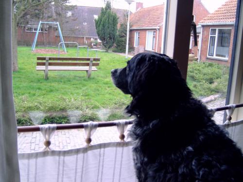 Tessa Window