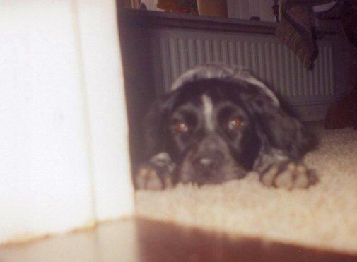 1999 Tessa vloer