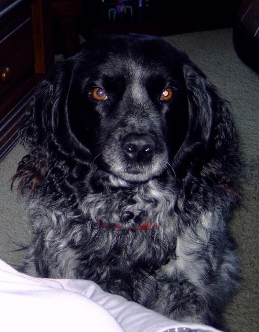 2003-12-22 Kop