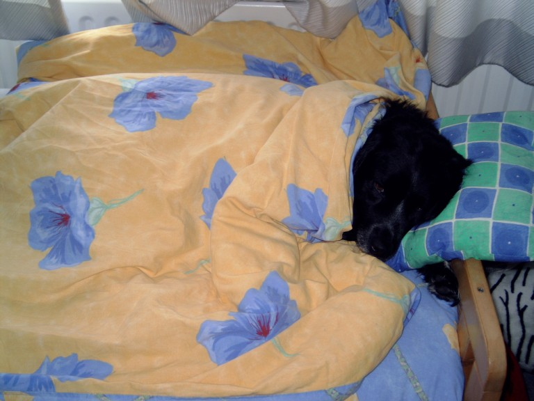 2004-03-15 Bed 1